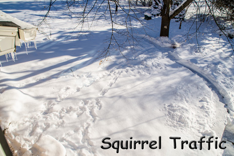 Squirrel Traffic.jpg