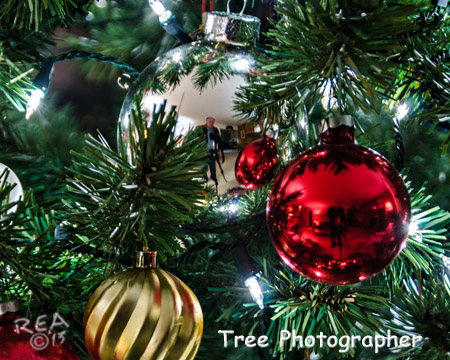 Xmas Tree  Photographer.jpg