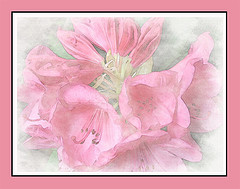 watercolor-flower-small.jpg