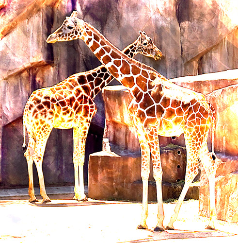 giraffes, watercolor.jpg